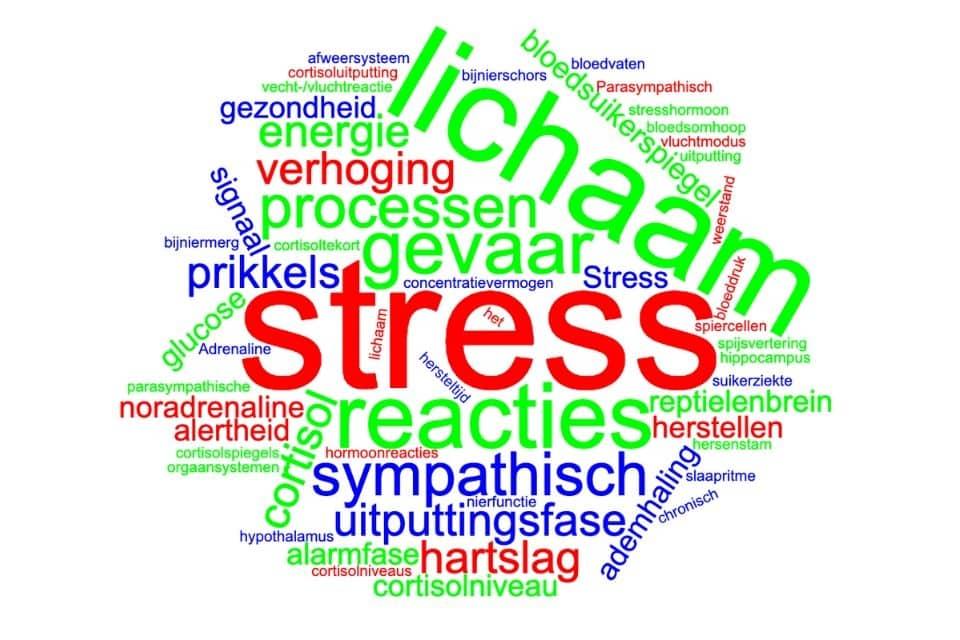 Je sympathisch zenuwstelsel en stress.